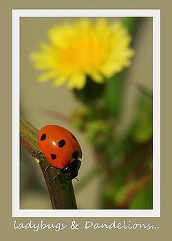 Randall Thomas Stone - Ladybug and Dandelion