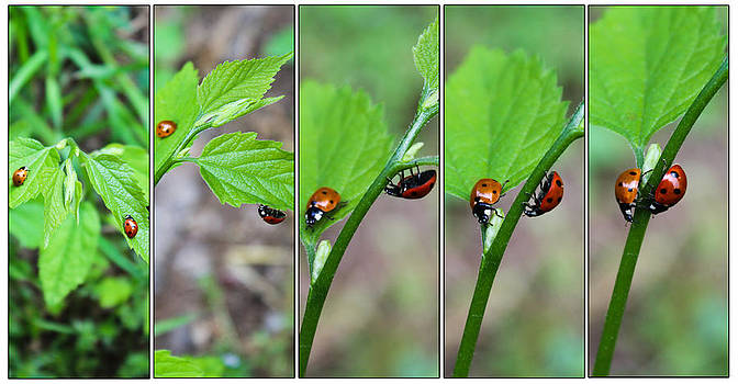 Ladybug Dance by Elizabeth Hart