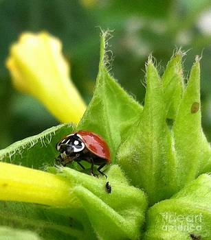 Ladybug by Daniele Smith