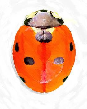 Ladybug by D Plinth