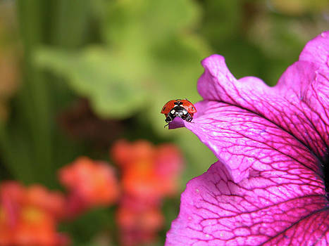 Stuart Turnbull - Ladybug Living on the edge