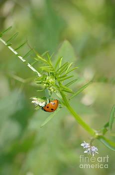Tannis  Baldwin - Ladybug