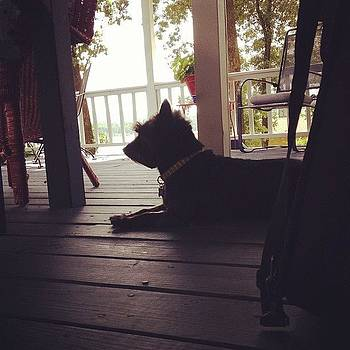 Lake Dog Waiting To Go Home And Be Yard by Jeff Madlock
