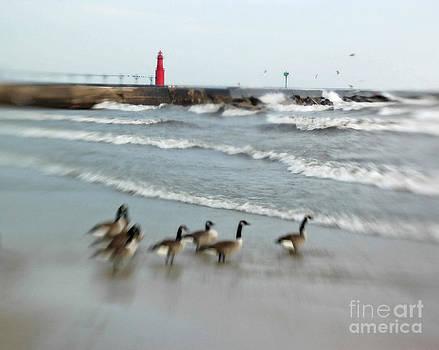 Lake Geese by John  Fix