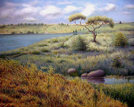Lake Shabona by Timothy Henneberry