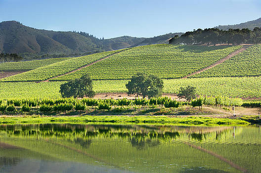 Lakeside Reflection of Vineyard by Kent Sorensen