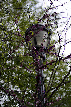 Lamp post by Marcel Krasner