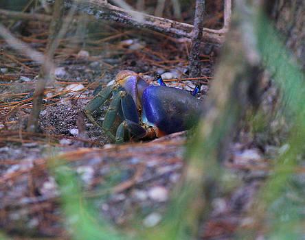 Suzie Banks - Land Crab Hideing
