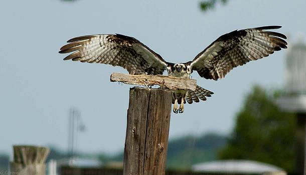 Landing Test by Glenn Lawrence