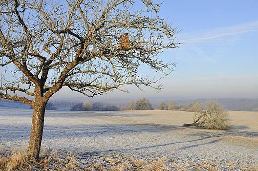 Landscape in beautiful warm morning light by Matthias Hauser