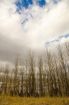 Christine Belt - Landscape Layers