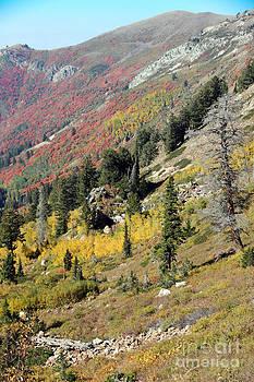 Landslide  by Carla   Stanley