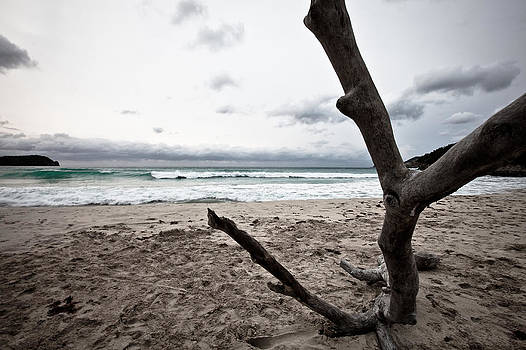 Large piece of driftwood on a beach on an overcast day by Anya Brewley schultheiss