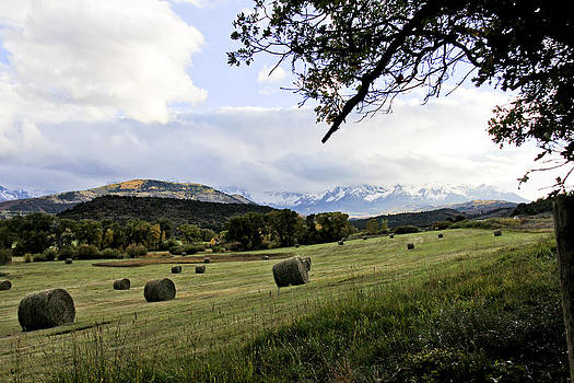 Last Hay before Winter by Marta Alfred