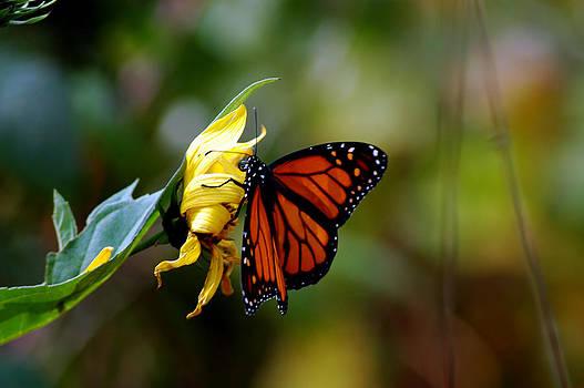 LeeAnn McLaneGoetz McLaneGoetzStudioLLCcom - Last Kiss of the Butterfly