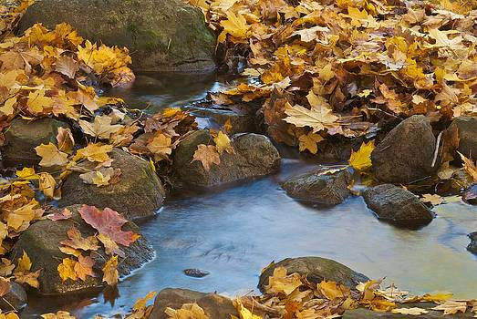 Michael Peychich - Last Signs of Autumn 0438