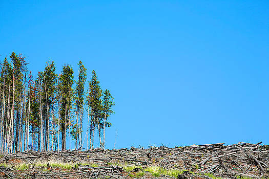 Last Trees Standing by Ivan SABO