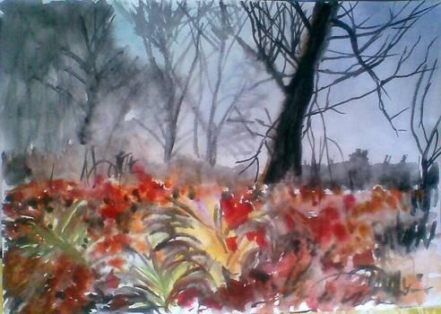Late Autumn by Vaidos Mihai