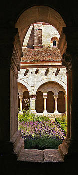 Lavendar among the arches by Christine Burdine