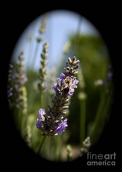 Danielle Groenen - Lavender Bee Vignette