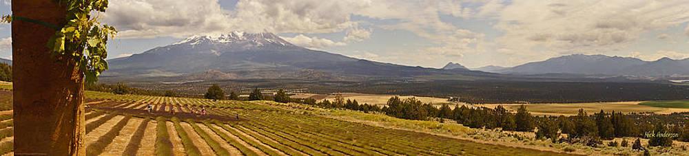 Mick Anderson - Lavender Farm Panorama
