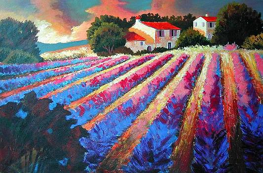 Lavender Fields  by Santo De Vita