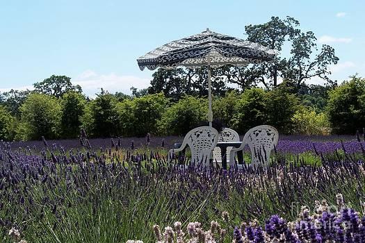 Lavender Tea Time by Laurel Thomson