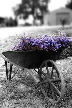 Lavender Wheelbarrow by Craig Sanders