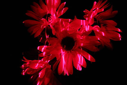 Lazerlight Floral by Mickey Hatt