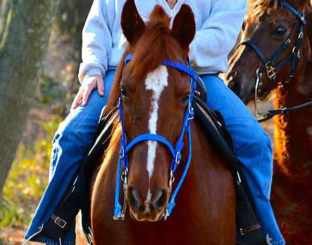Bill Owen - Lead Horse