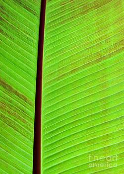 Sabrina L Ryan - Leaf Abstract