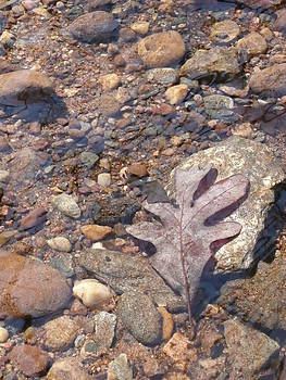 Angela Hansen - leaf and pebbles in stream