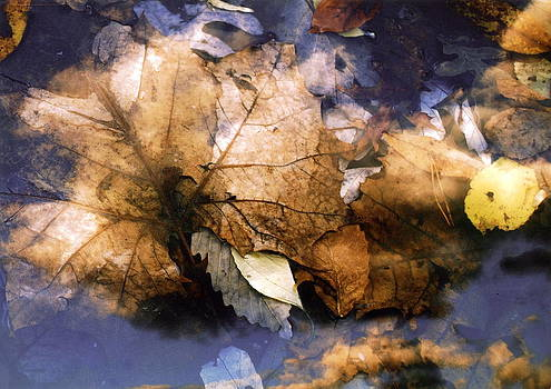 Leaf Clouds by The Wholeheart