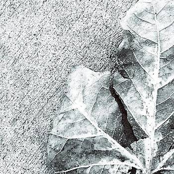 #leaf #dead #black&white #picoftheday by Joe Pardo
