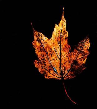 Leaf  by Kevin Lubin