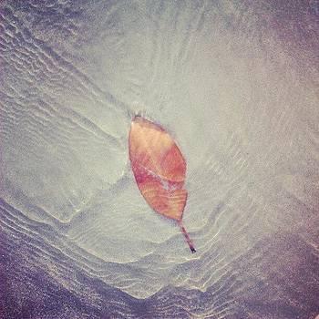 Leaf by Nawarat Namphon