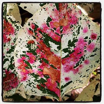 Leaf Painted By God by Susan Smela