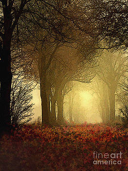 Leaf Path by Robert Foster