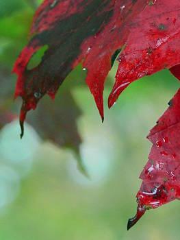 Leaf Shadows by Mandi Howard