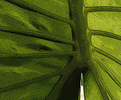 Leaf Variation - 4 by T R Maines
