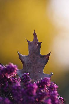 Leaf by Yuri Santin