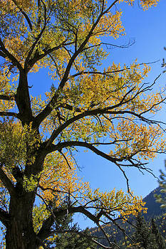 Leafy Contrast by Marta Alfred