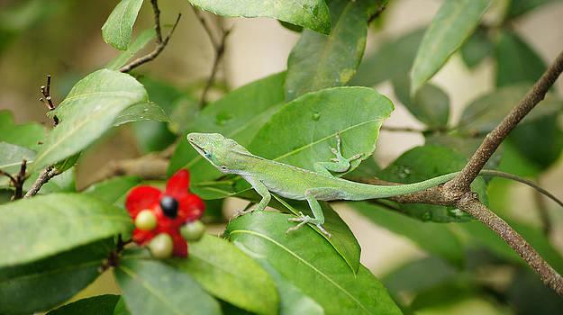 Leafy Lizard by Piers Caswell