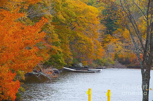 Leafy Stream by Charles  Ridgway