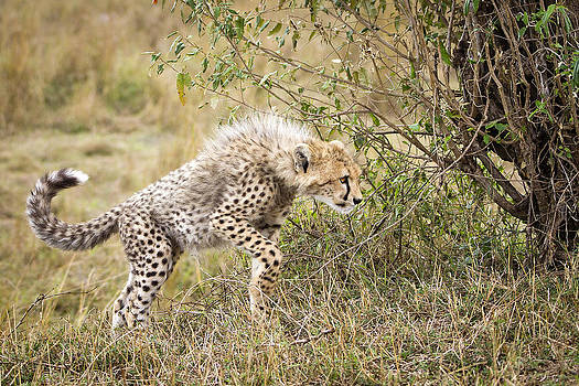 Learning to hunt by Bob Falconer