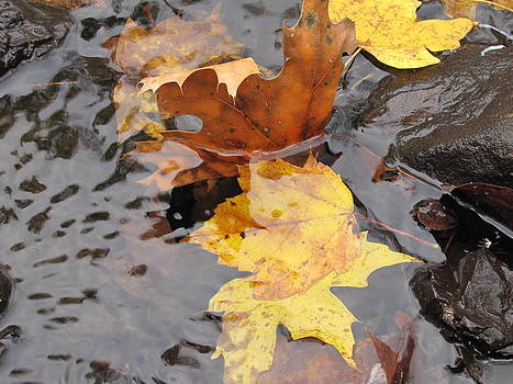 Leaves Adrift by Jennifer Weaver