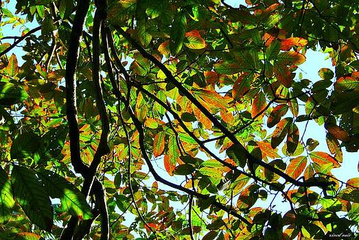 Leaves and Branches by Vinod Nair