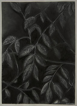 Leaves in Darkenss by Rebecca Moore
