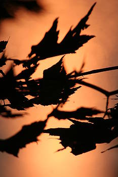 Leaves in Sunset by Carolyn Reinhart