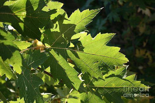 Leaves by Kelly Christiansen